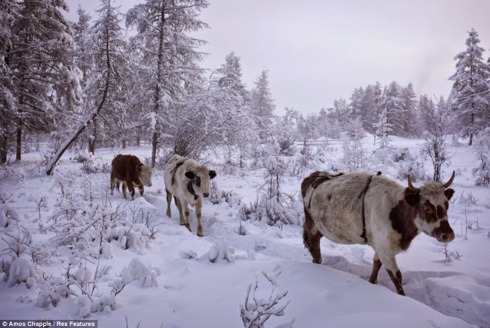 Coldest Inhabited Place on Earth - Oymyakon, Russia