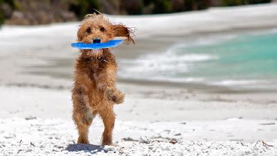 Disfruta de tu perro en la playa