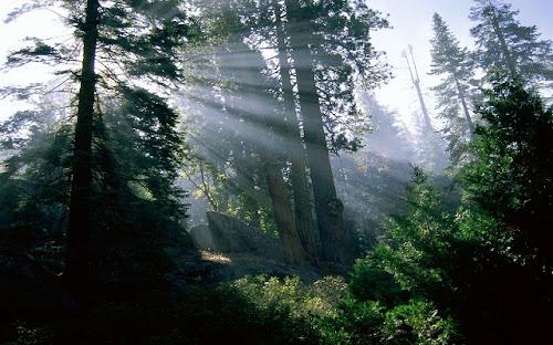 Foto-Foto Hutan Lebat Terbaru