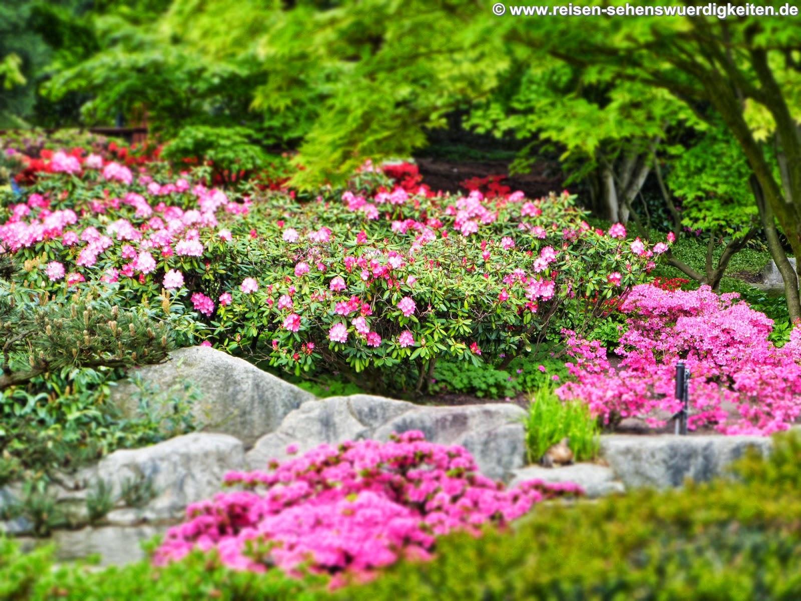 Hintergrundbilder Kostenlos Blumen hintergrund natur blume