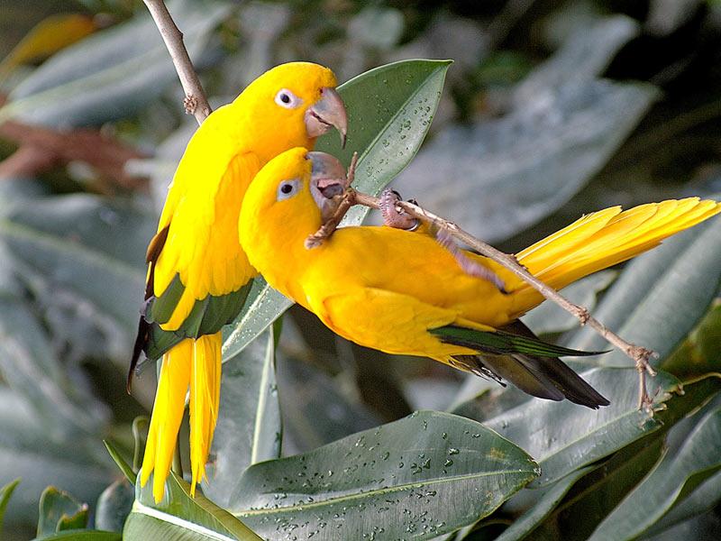 Colourful Birds Wallpaper Birds hd Wallpaper Birds