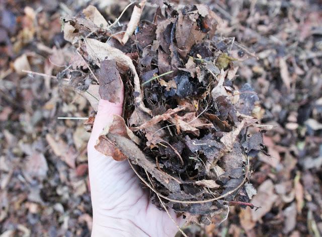 kolorowe kalosze idealne do ogrodu, soczysty zielony trawnik jesienbią, jak dbać o ogród, prace w ogrodzie przed zimą,kiedy zbierac liście, czym zbierać liście, odkurzacz ogrodowy bosch