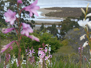 This is an incredible view from my mothers garden on Bruny Island. (bruny island garden)
