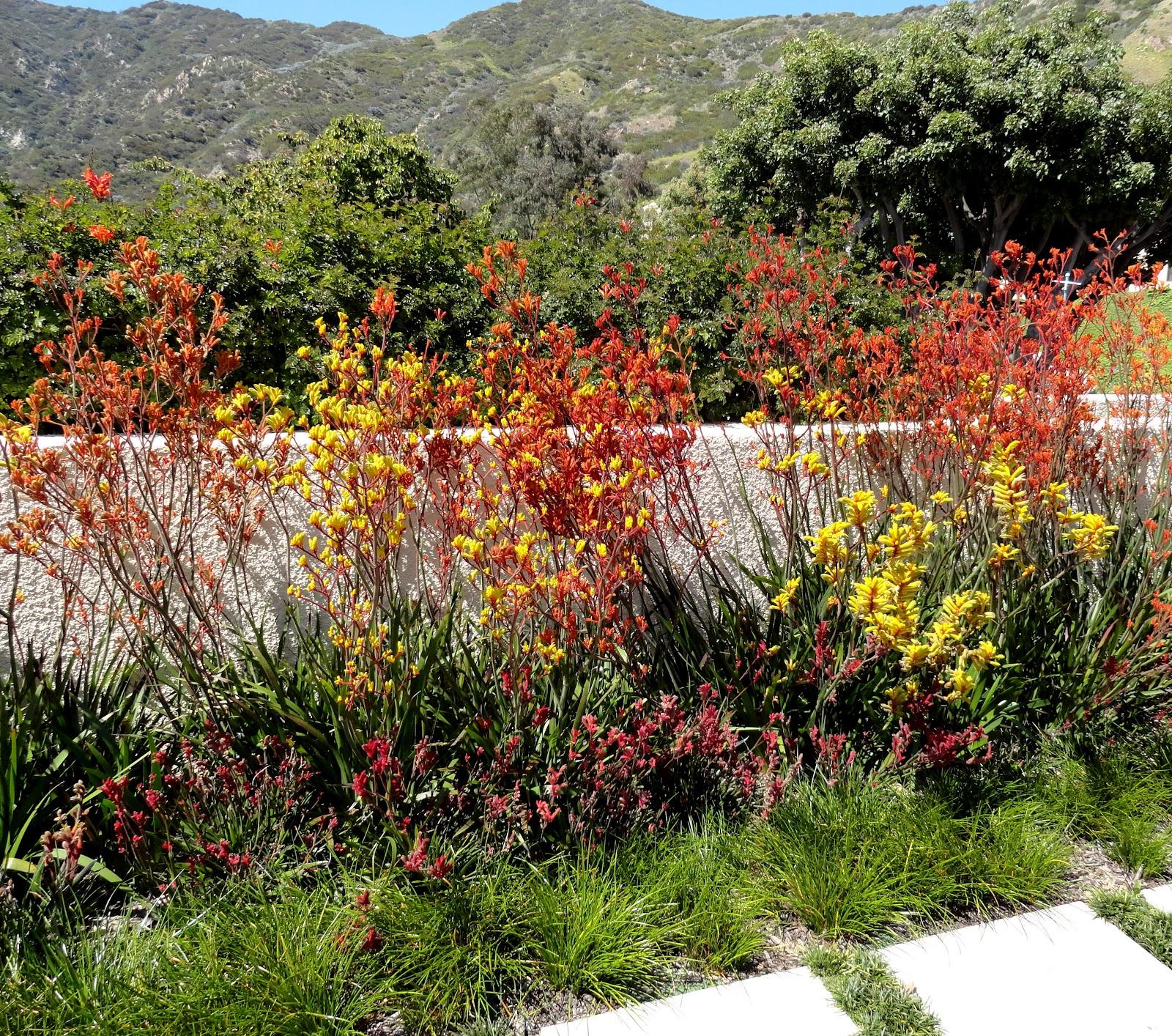 danger garden: The Heroes Garden at Pepperdine University