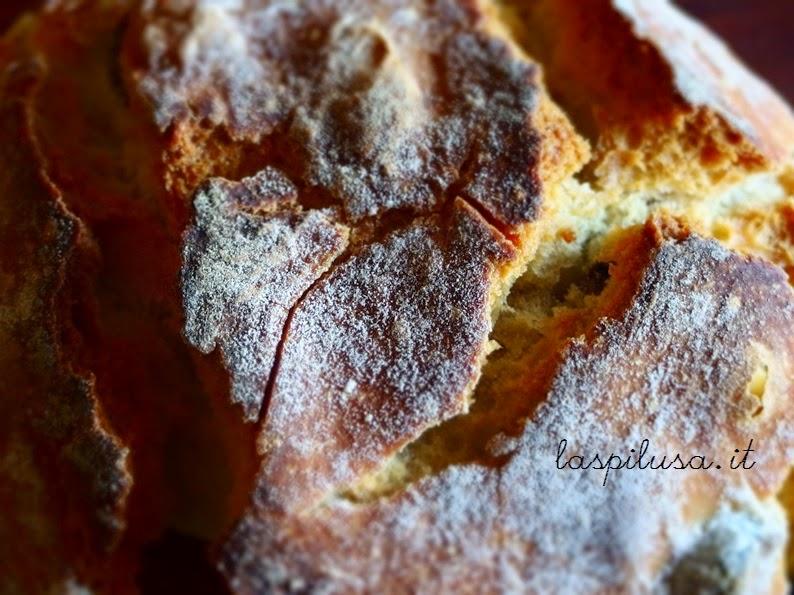 Pane tipico del Salento: puccia con le olive