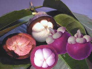 manfaat buah manggis bagi tubuh