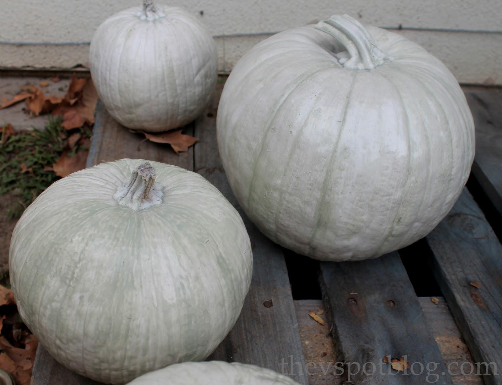 turning plain pumpkins into elegant pumpkins for thanksgiving the