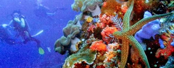 Bali Hai Diving Adventure - Bali Cruises, Activities, Vacation, Adventure, Attractions