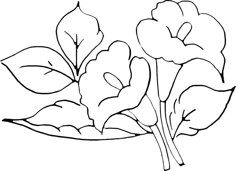 Amei Esta Arte  Aproveito Para  Partilhar Os Riscos Contendo Flores