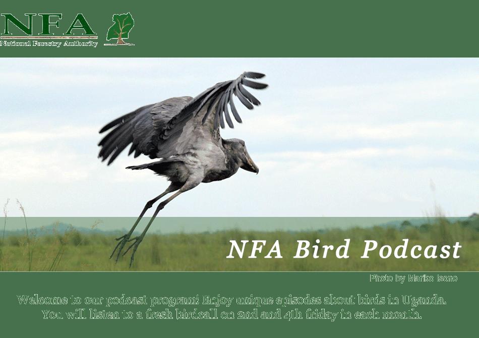 NFA bird podcast