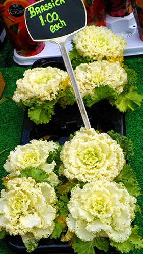 brassica look like flowers in display