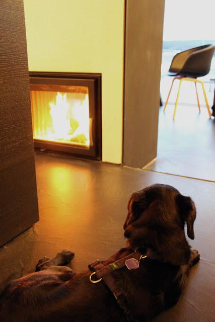 Hofgut Hafnerleiten - Urlaub mit Hund