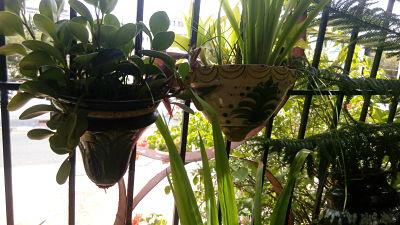 Macetas en el balcón