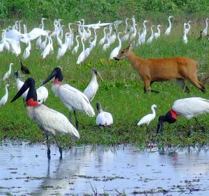 Passeio de um dia no Pantanal