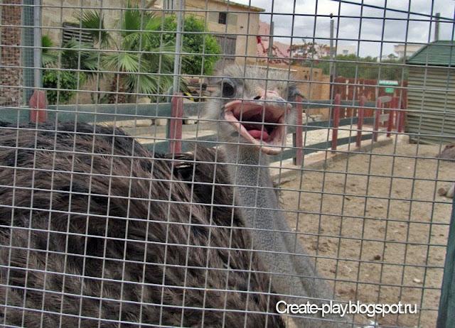 мини-зоопарк «Carthage Land» Тунис