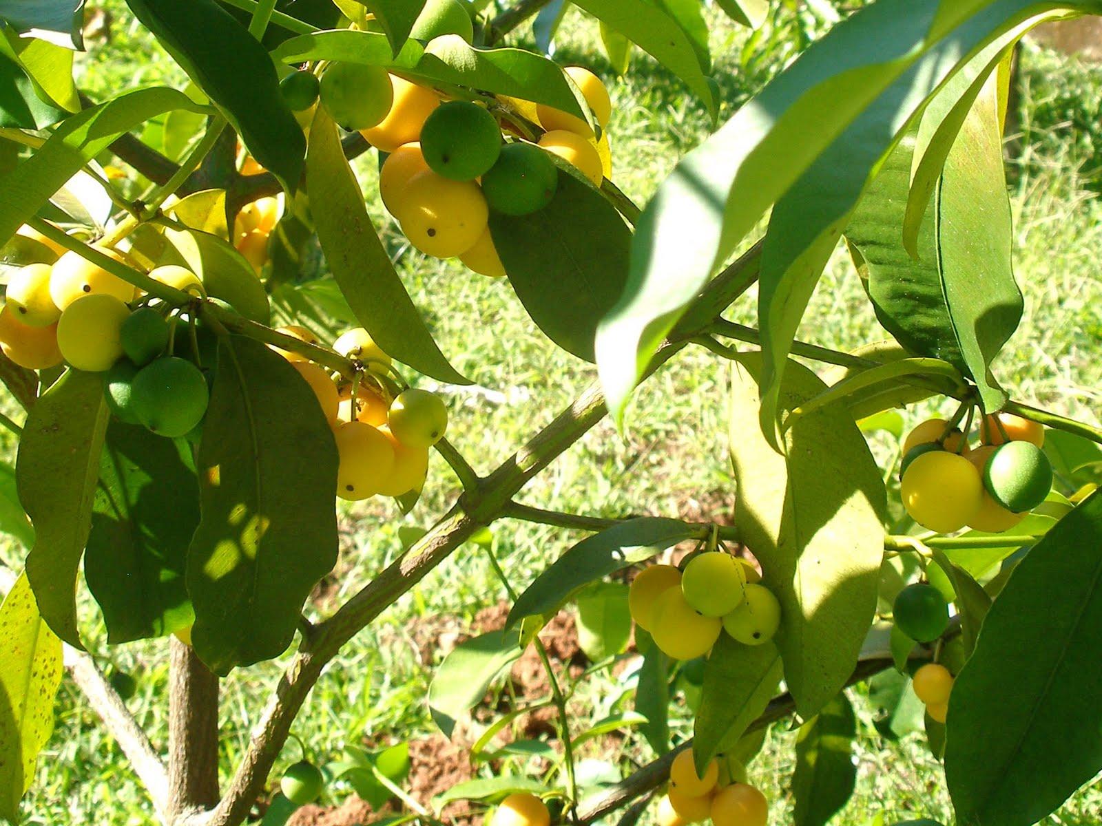 Agrochic Gardening Inspiration Advice Rboles Frutales En Tu  ~ Cuando Hay Que Abonar Los Arboles Frutales