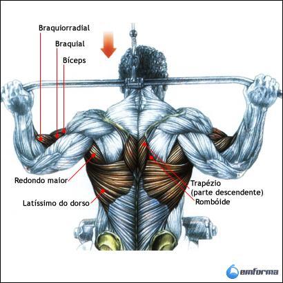 Exercicios dorsal costas