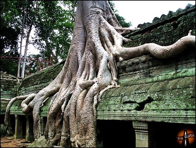 Ta-Prohm-Templos-de-Angkor_15