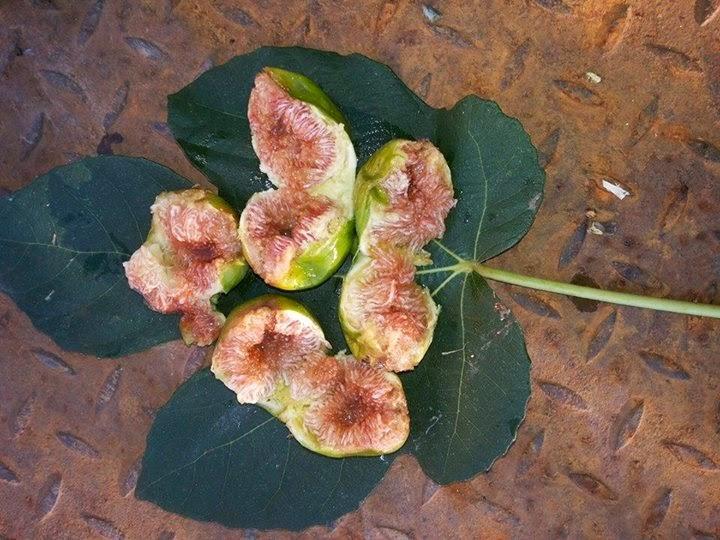 bay of figs marc houle