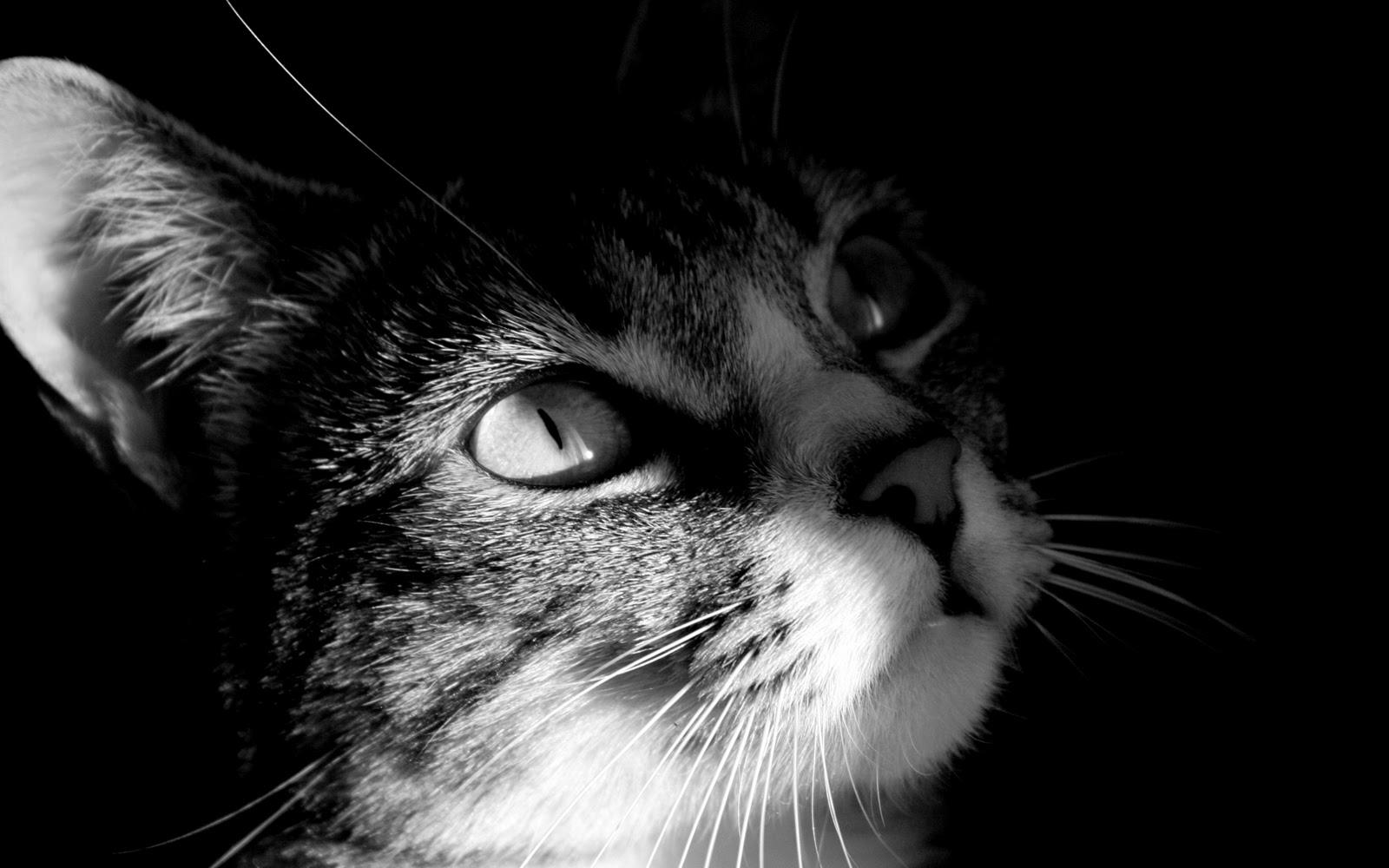 tabby kitten hd wallpaper - photo #30