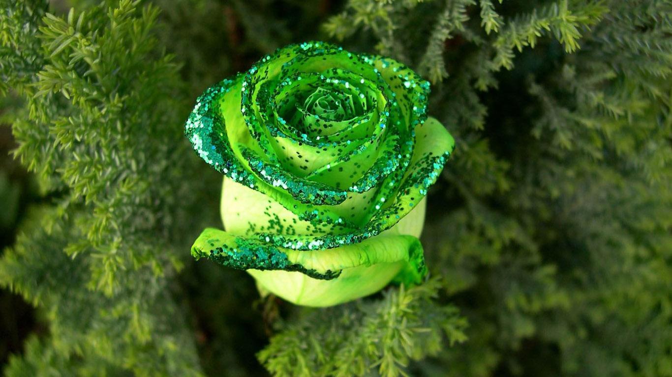 http://1.bp.blogspot.com/-luBhj_genpU/T2vIEJ99WDI/AAAAAAAAEIY/WhAa2a64iHE/s1600/Flower+%2810%29.jpg