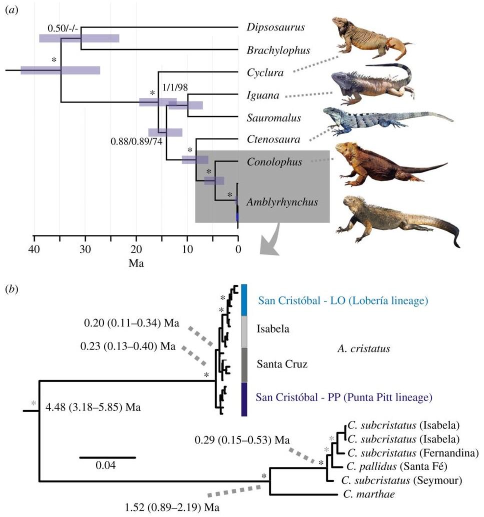 Iguana-Evolution-on-the_Gal%25C3%25A1pag