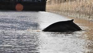 La ballena que llego a Puerto Madero, cerca de la terminal de Buquebus