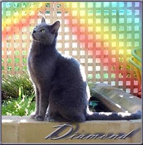 RIP Diamond