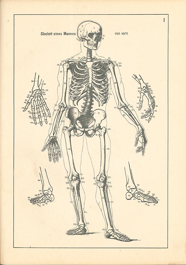Gemütlich Katze Anatomie Für Künstler Zeitgenössisch - Anatomie ...