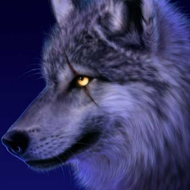 gray wolf cool facts