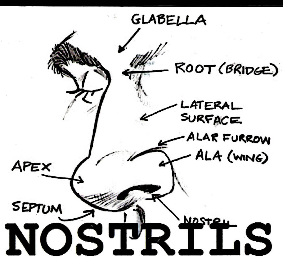 Heebee Post Nostrils Greensboro North moreover 3 Reasons Why Cross Cultural Missionaries Struggle To Be Home For The Holidays in addition 2006 07 01 archive together with Be Careful When You Summon 3 41214525 further Test Your Senses. on sending smells