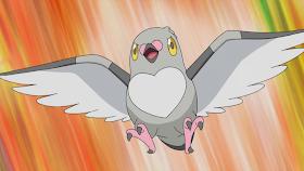 Pokémon  da Semana(Pidove)