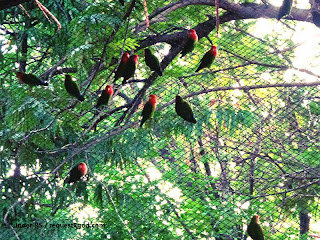 Parrots and the net