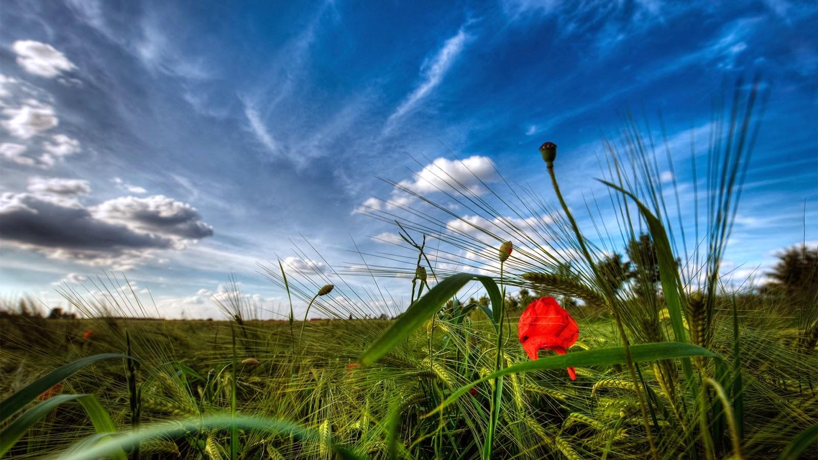 Achtergrond met bloemenveld