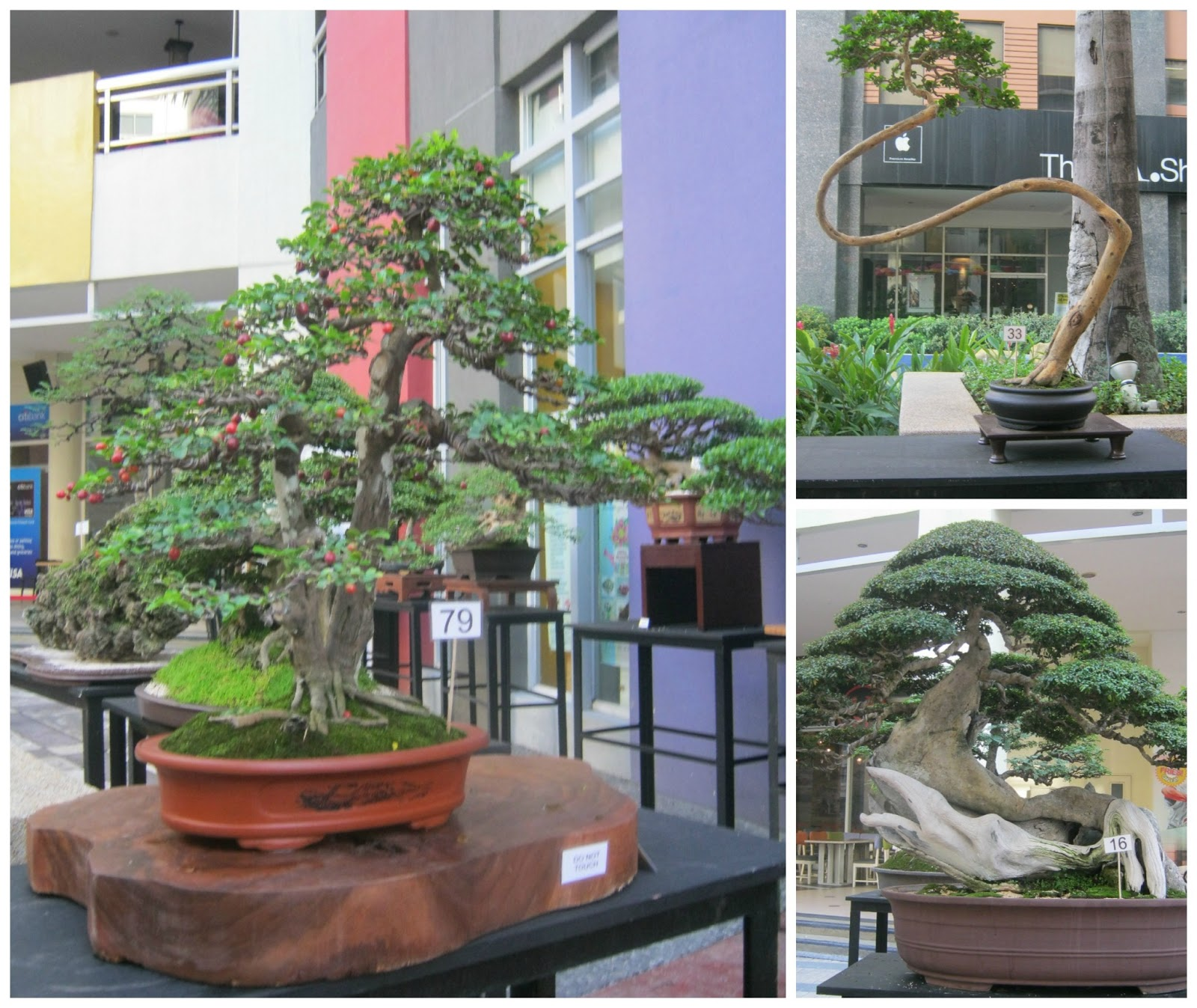 office bonsai. Just This Week, Eastwood City Became The Venue For Asia-Pacific Bonsai Friendship Federation Convention And Exhibition. I\u0027ve Always Passed By Area Office