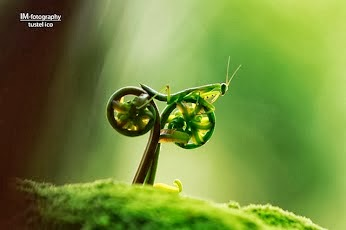 vs. Nature... :)