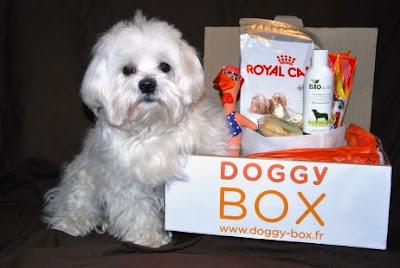 Casting photo gratuit Doggybox: devenez l'égérie de la marque