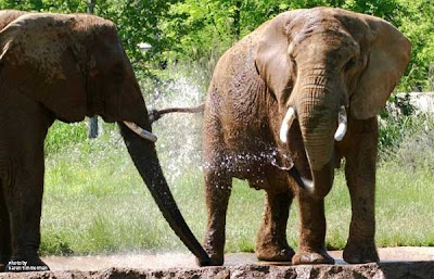 Nashville Zoo Elephant attraction - Grassmere Hours and Coupons