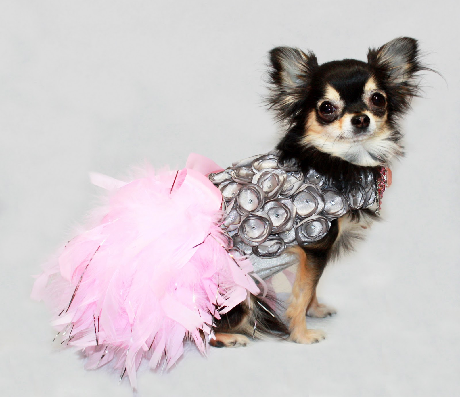 Ko couture pet fashion pet photography and dog models bebe