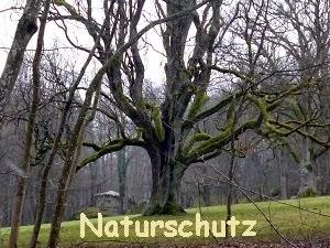 Bund Naturschutz
