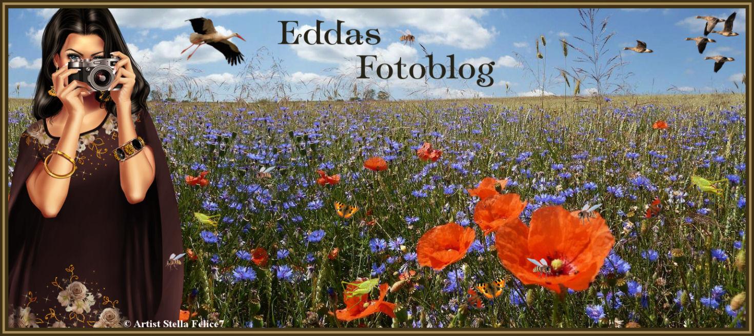 Eddas Foto Blog