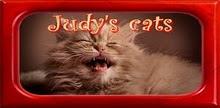 Judy-cats