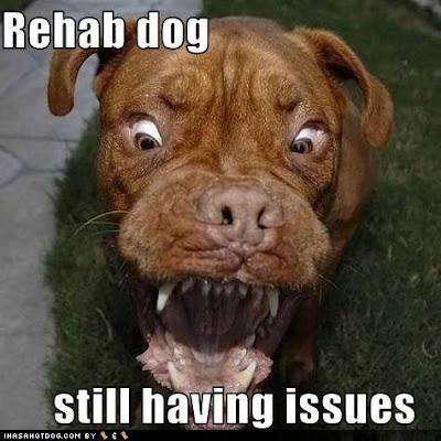 Rehab Dog