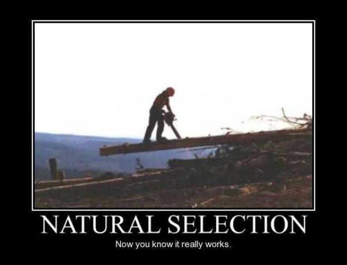 Natural Selection  Darwin Award