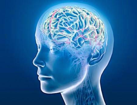 aktivitas otak