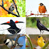 Can you name twenty of the most common North American birds?  Certainly if you live there you should be able to name a good number of thes...