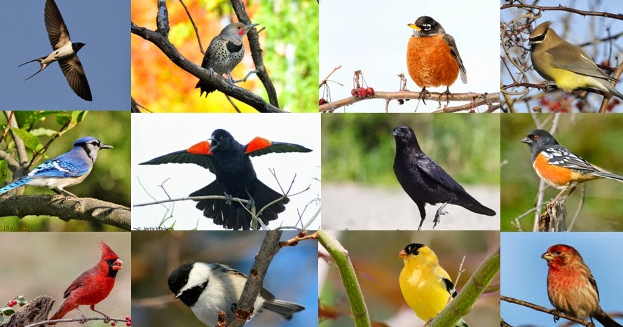 Quiz: Can You Name These 20 Common North American Backyard ...