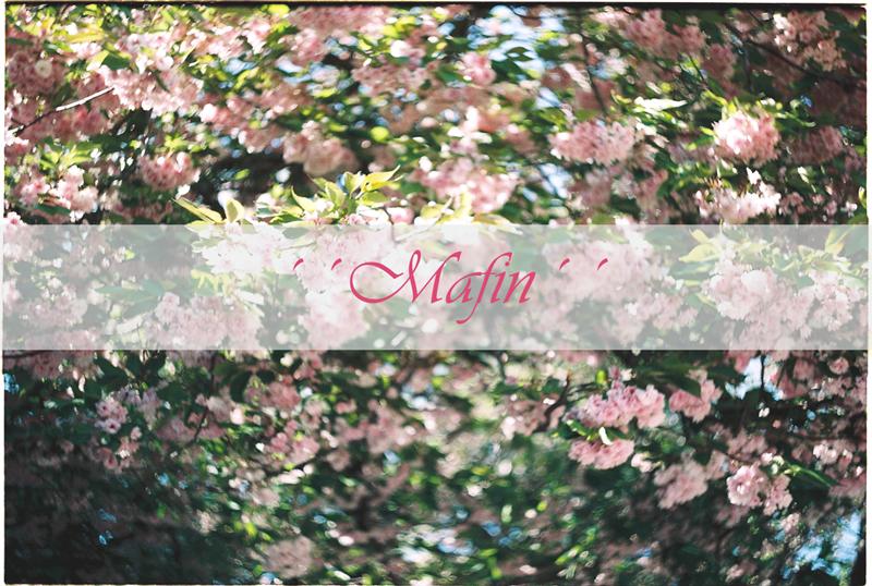 ´´ MAFIN ´´