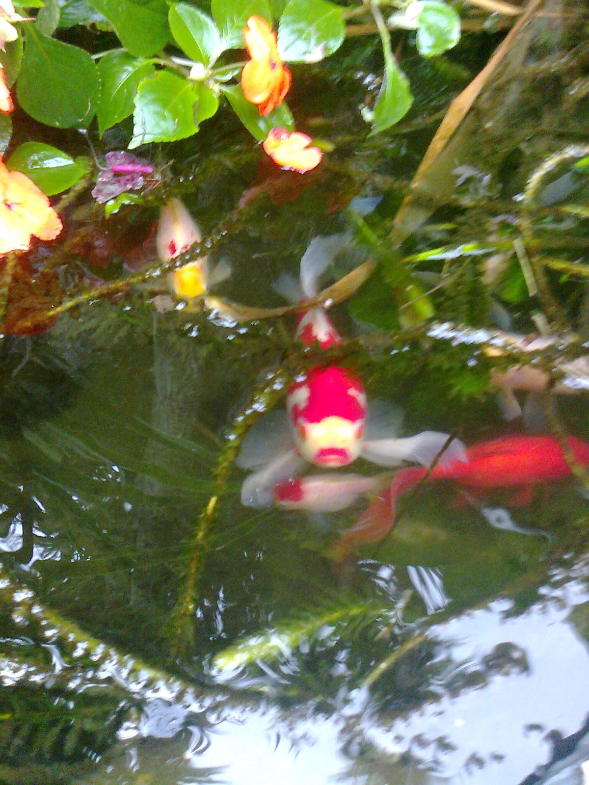 Jardines orientales en casa for Plantas estanque