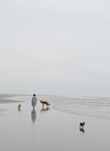 beach, ocean, lifestyle, washington, travel, corgi, dogs